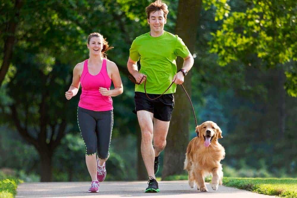 Couple jogging with golden retriever