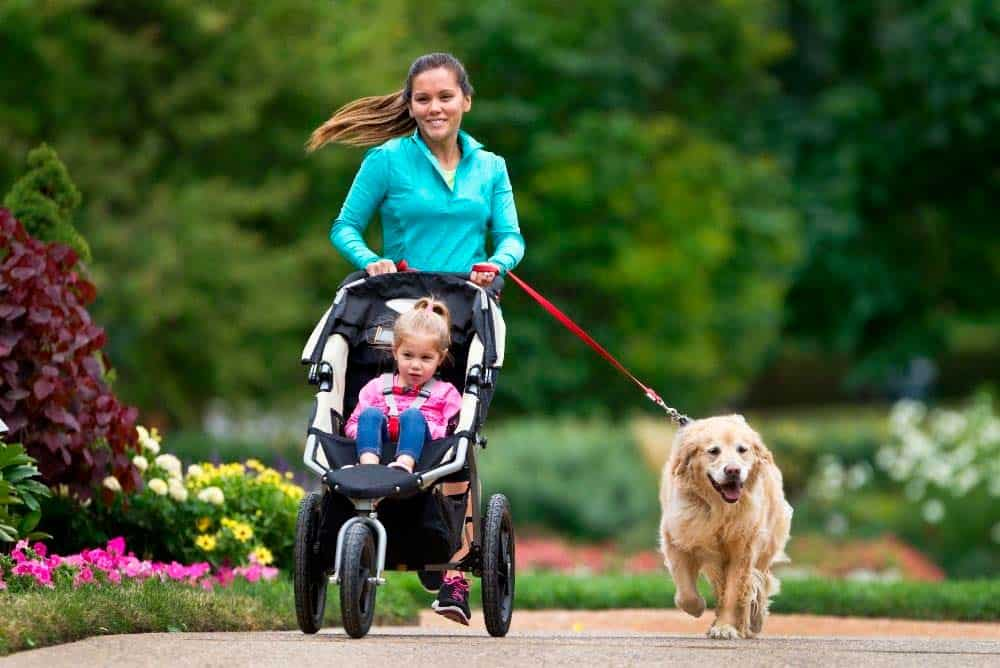 Mother with daughter in stroller jogging with their golden retriever