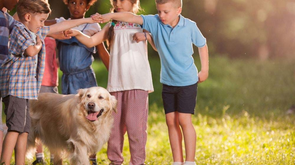 Young children playing games with a golden retriever.